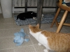 Kiwi comes to investigate the interloper